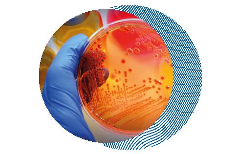 микробиологический анализ пищевых продуктов лаборатория phytocontrol
