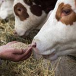 Alimentation animale
