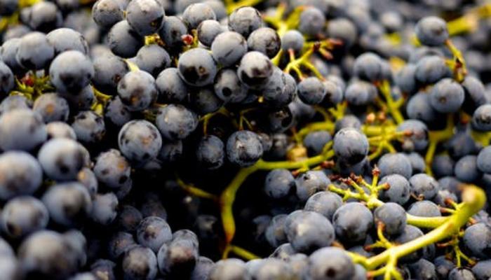 raisins(1)